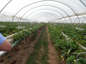 High-End Drip Irrigation