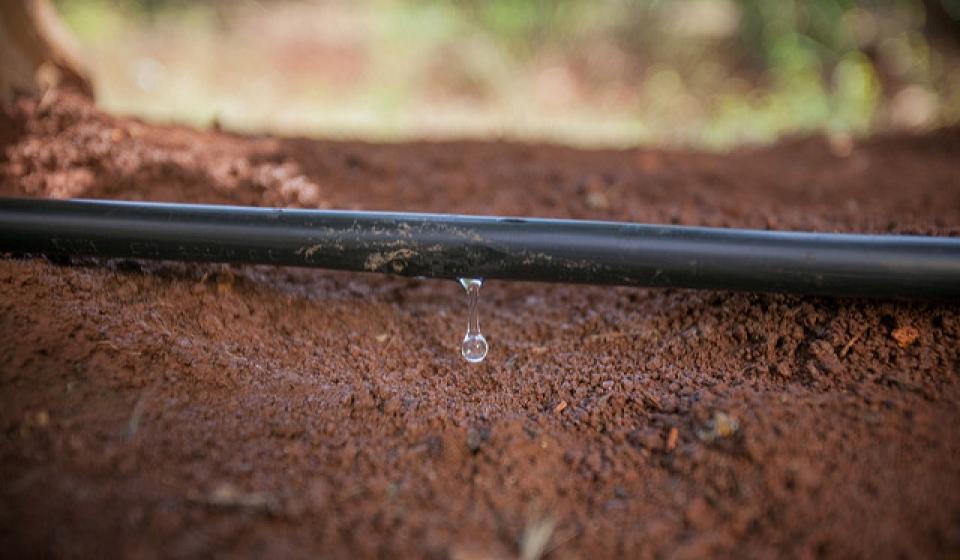 Drip Irrigation California